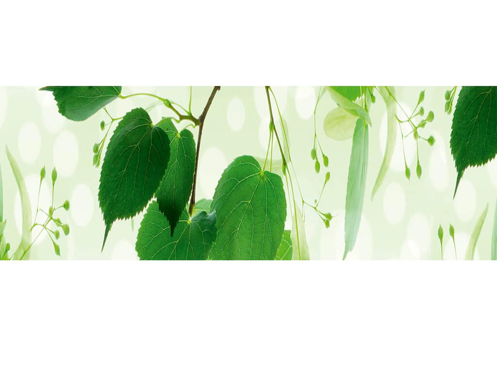autocolant-decorativ-frunze-verzi-8339