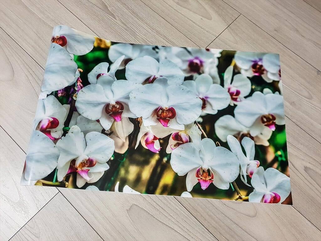 autocolant-model-orhidee-5587