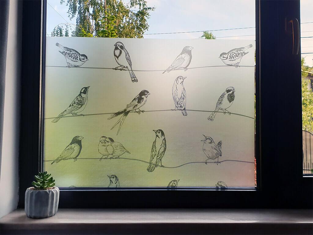 folie-geam-autoadeziva-birdy-9937