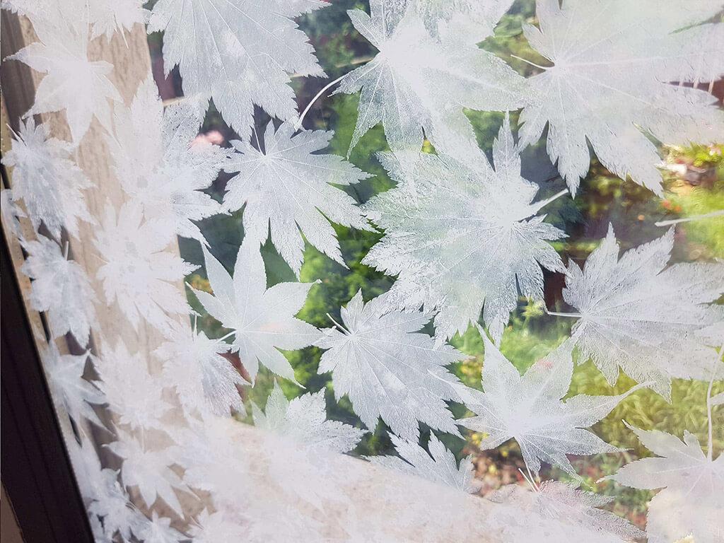 folie-sablare-decorativa-frunze-albe-5511