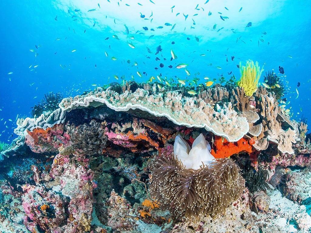 fototapet-peisaj-marin-corali-si-pesti-2802